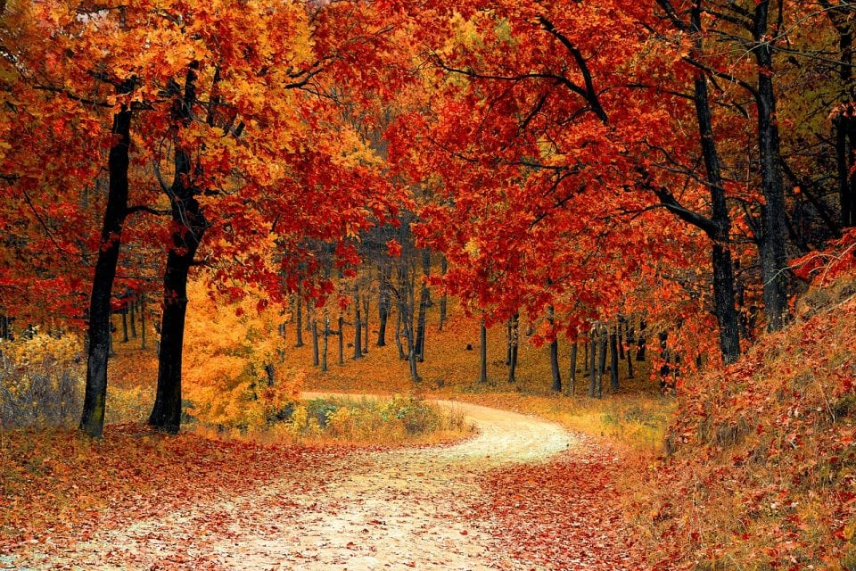 redenen waarom de herfst leuk is