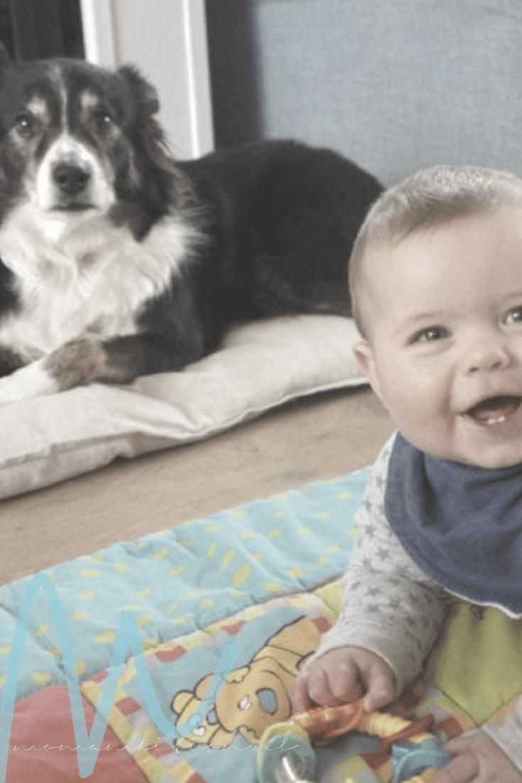 Momambition.nl Huisdieren en baby's, kan dat samen?